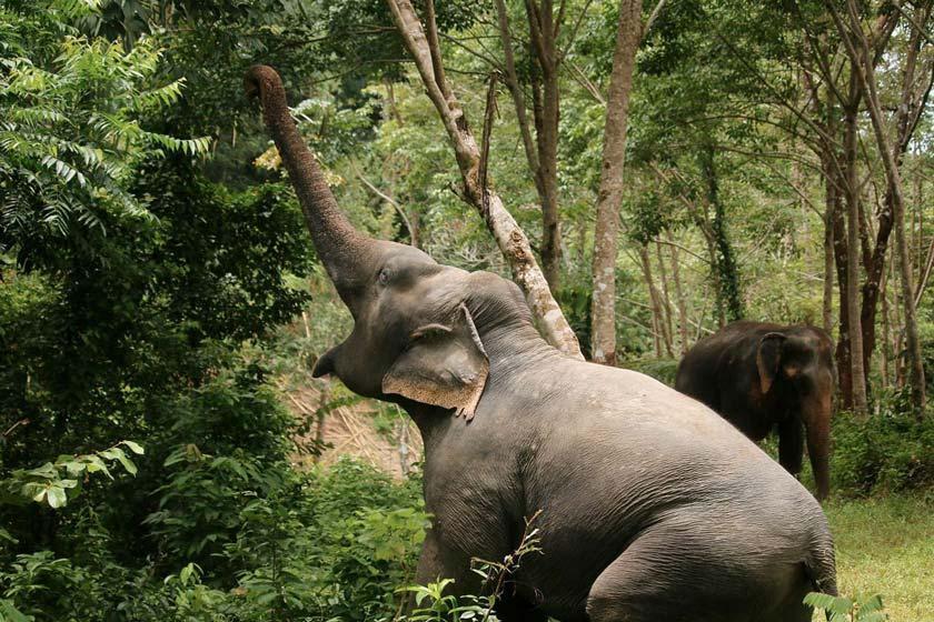پناهگاه فیل های پوکت