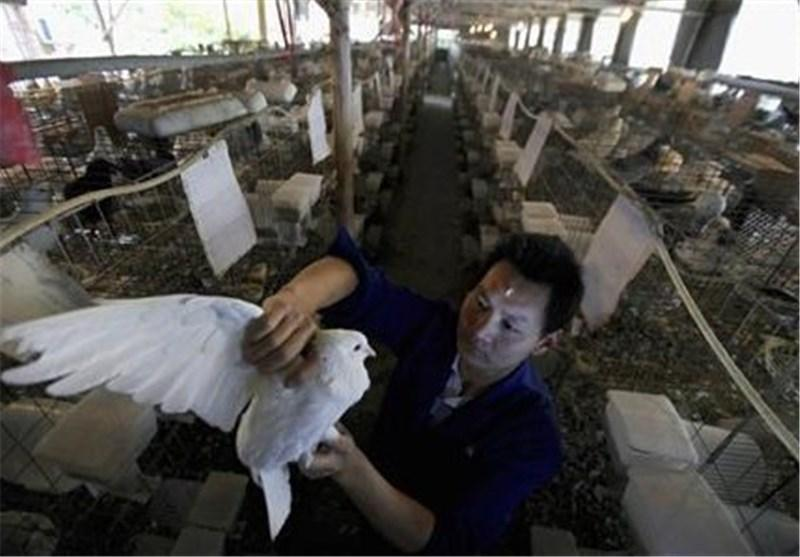 مرگ یک تن دیگر در پی شیوع آنفلوانزای مرغی در اندونزی