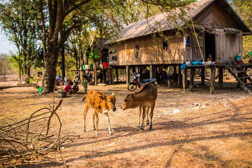آشنایی با داک لک ویتنام
