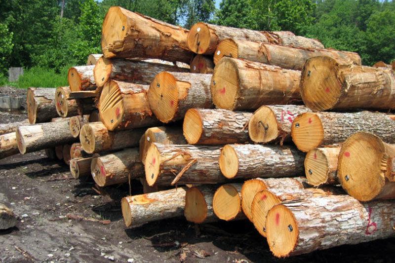 خبرنگاران 10 تن چوب جنگلی قاچاق در آستارا توقیف شد