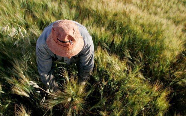 کود هوشمندی که از آلودگی خاک جلوگیری می نماید