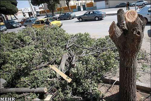 اعتراض جالب یک هنرمند کرمانی، عکس