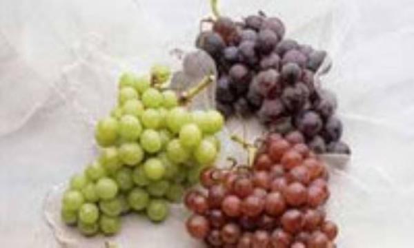 انگور خاصیت ضدچاقی و ضدپیری دارد